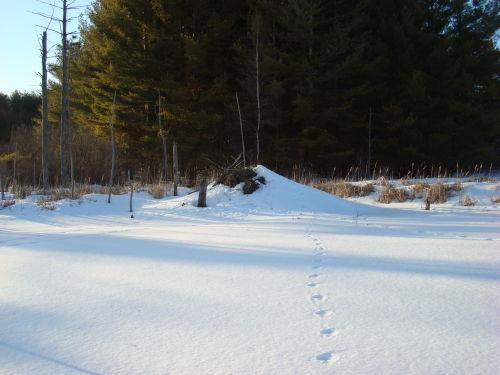 Follow the trail