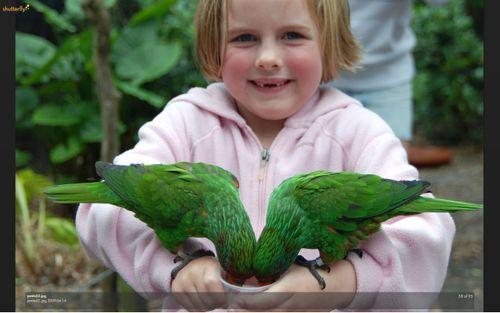 Lily love birds 1