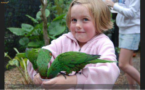 Lily love birds 2