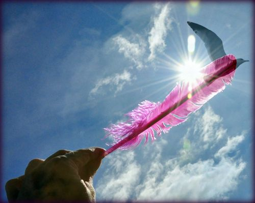 Tickled flare pink